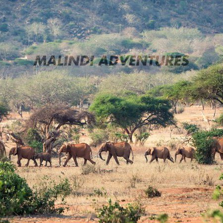 malindi adventures 450x448 - Malindi Adventures