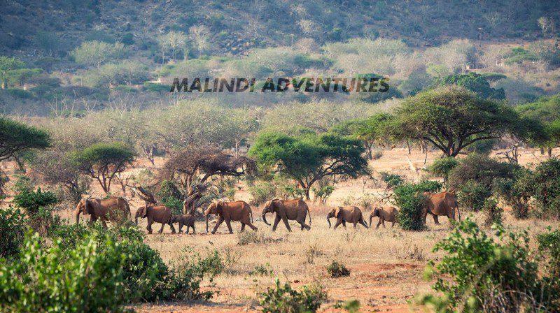malindi adventures 800x448 - Malindi Adventures