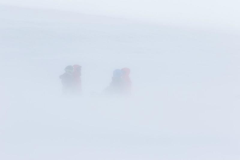K0A2726 - Winter Wild