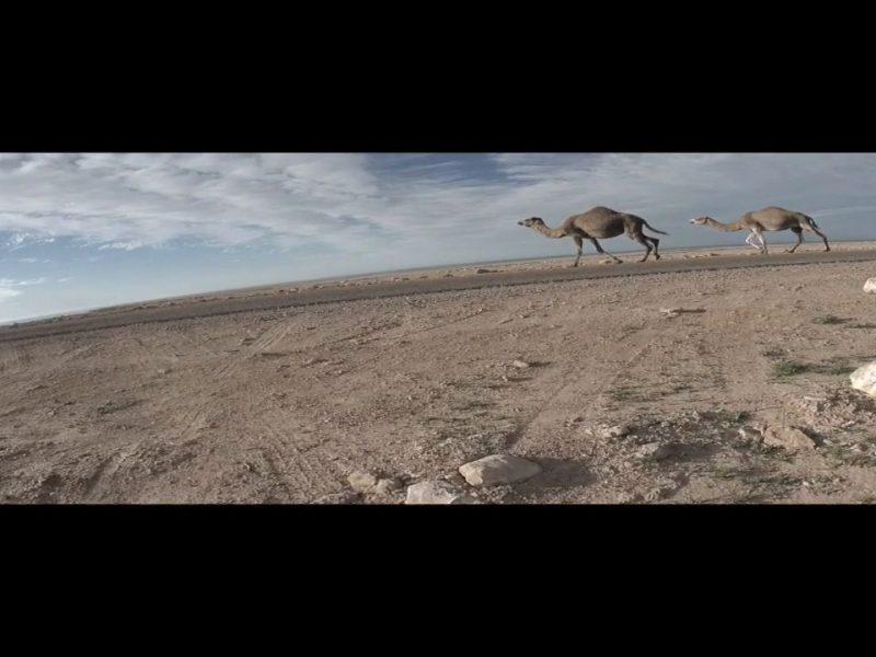 chaos in the desert 800x600 - Chaos in the Desert