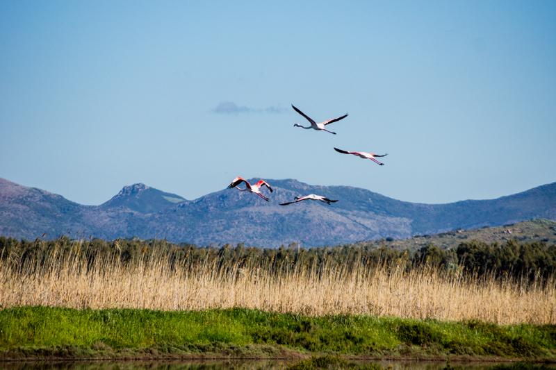 EN Sardinia 4 - Sardinia Quest – Going Where Flamingos Sing