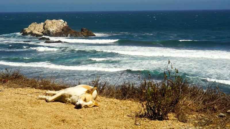 dsc07616 - Pedreira's Chilean Surf Adventure