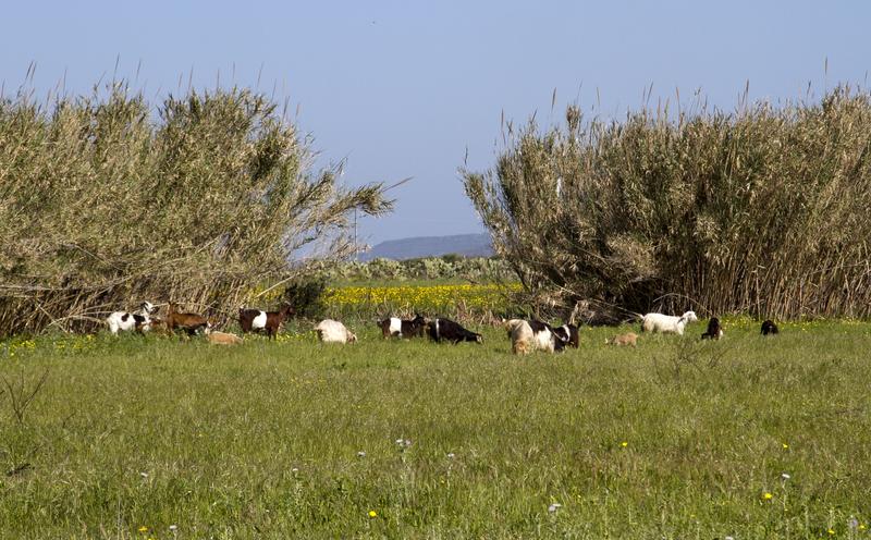 img 53821 - Secret Sardinia
