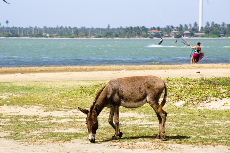 picture5 - Sri Lanka Times