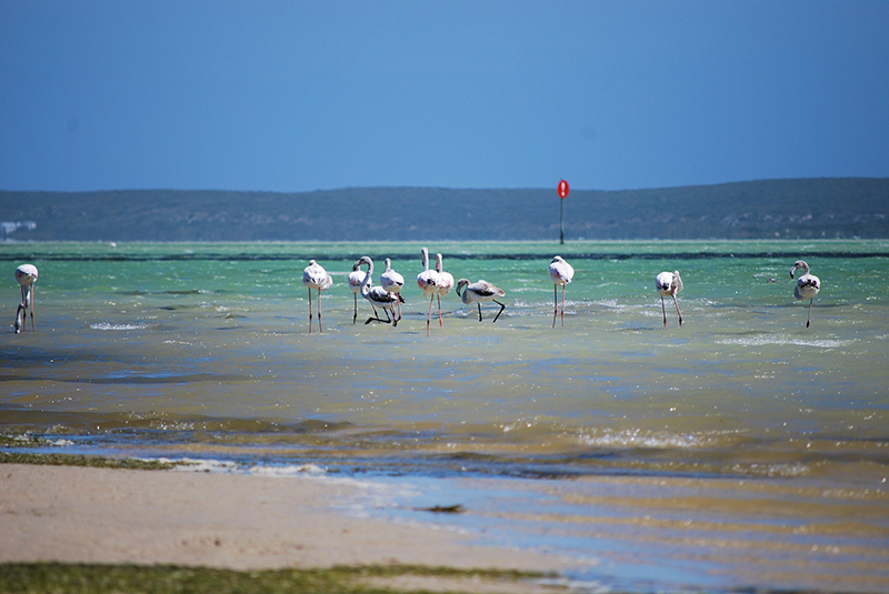 National Park.13 - Langebaan: The perfect place to kitesurf