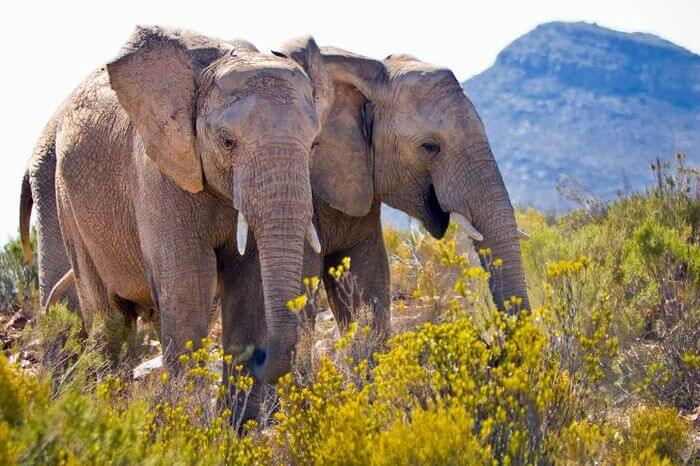 Private Luxury Big Five Game Reserve Near Cape Town7 - Kitesurfing holidays in South Africa