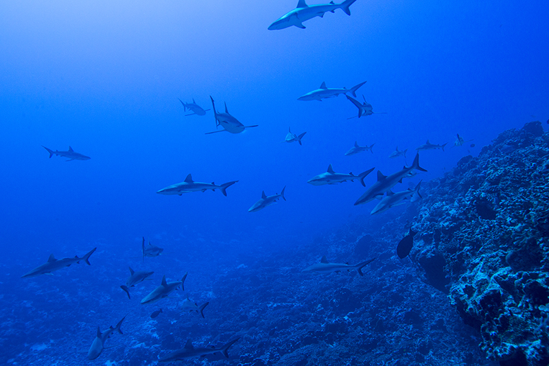 6 - Sharing Paradise With Sharks