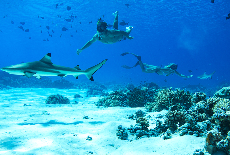 7 - Sharing Paradise With Sharks
