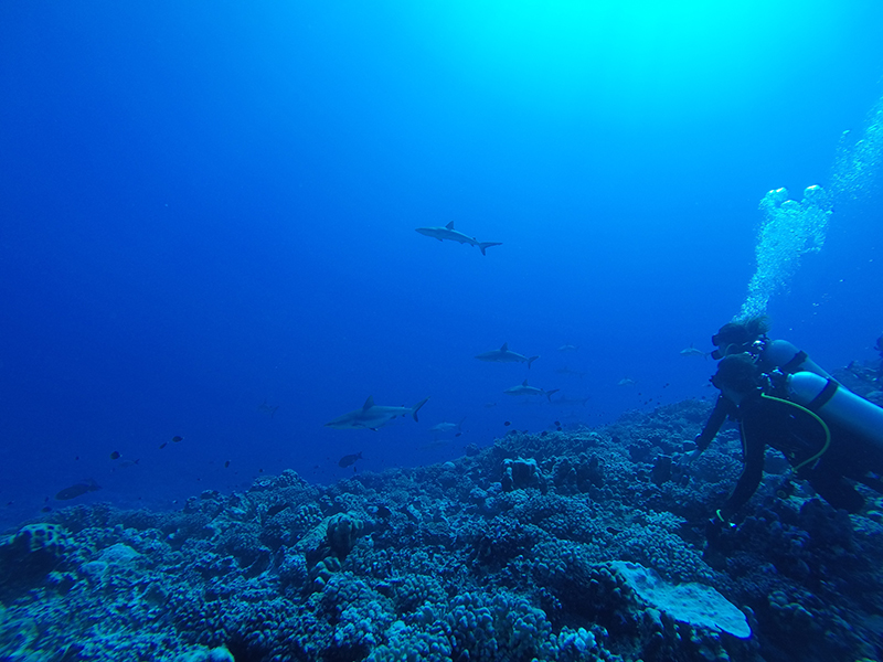 GOPR5654 - Sharing Paradise With Sharks