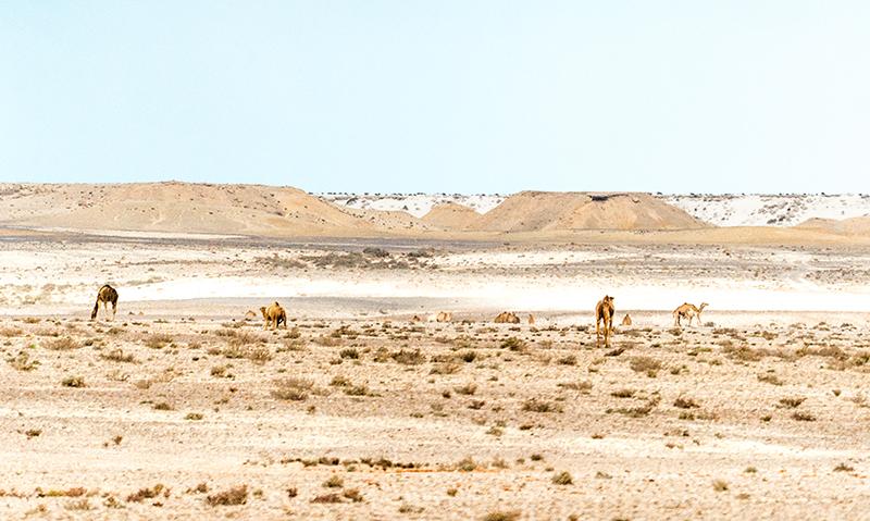 Desert trip high res 23 - Kings of the Desert