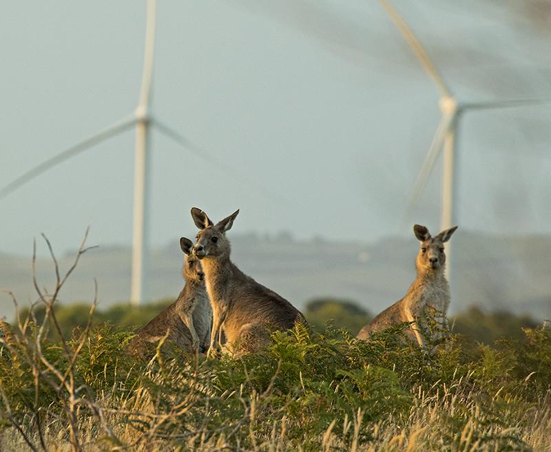 kanga wind R87A1137 - The Road South
